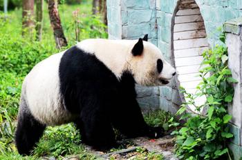 【其它】碧峰峡野生动物园(含观光车票,动物表演票)+碧峰峡风景区套票成人票-美团