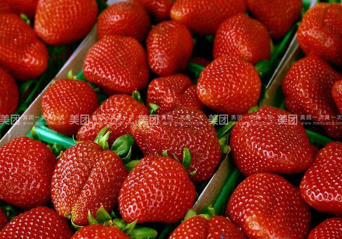 兴寿甜润草莓园预订/团购