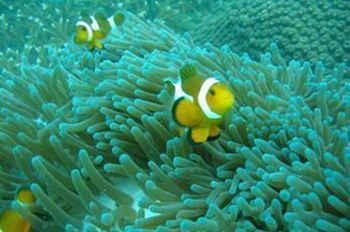 【亚龙湾】亚龙湾海底世界-美团