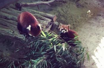 【湖州出发】杭州野生动物世界纯玩1日跟团游-美团