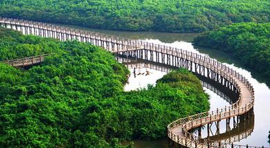 【澄迈县】富力红树湾湿地公园单人皮划艇(成人票)-美团