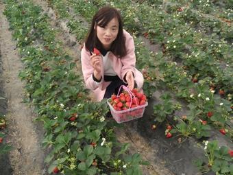 和园草莓农莊