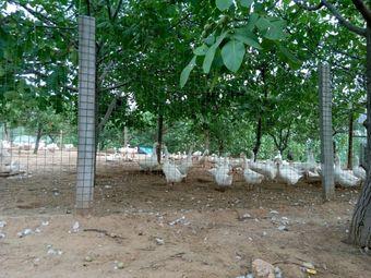 境雅生态农业观光园