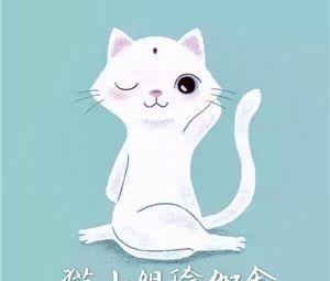 猫小姐瑜伽舍