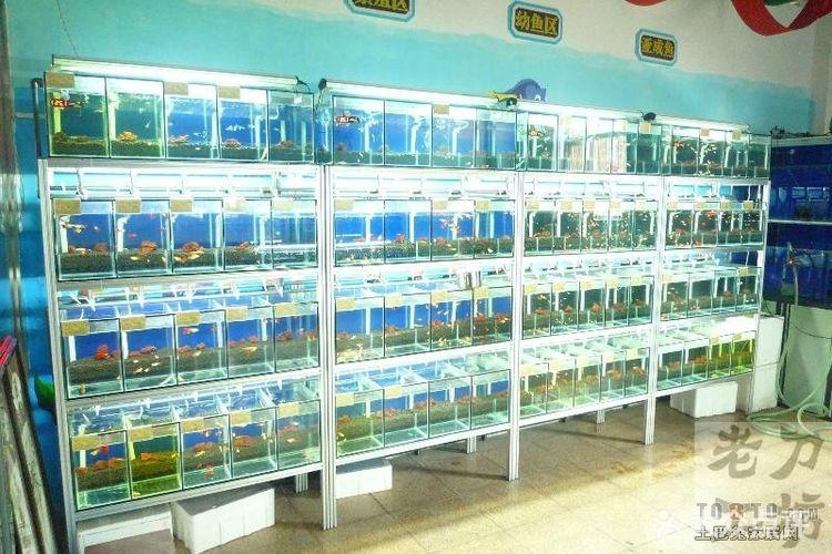 求一张孔雀鱼组缸设计图?