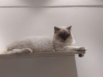 猫屋猫咖桌游