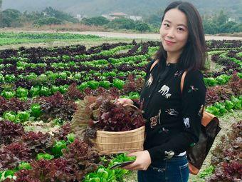 千宝野菜谷
