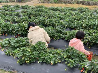 陈氏草莓采摘园