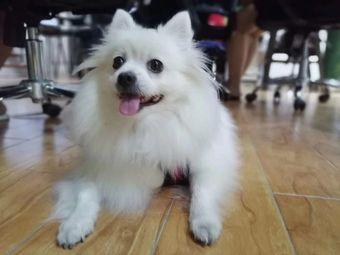 巨小萌宠物行为心理中心(广州塔店)