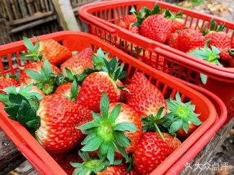 芳芳草莓园
