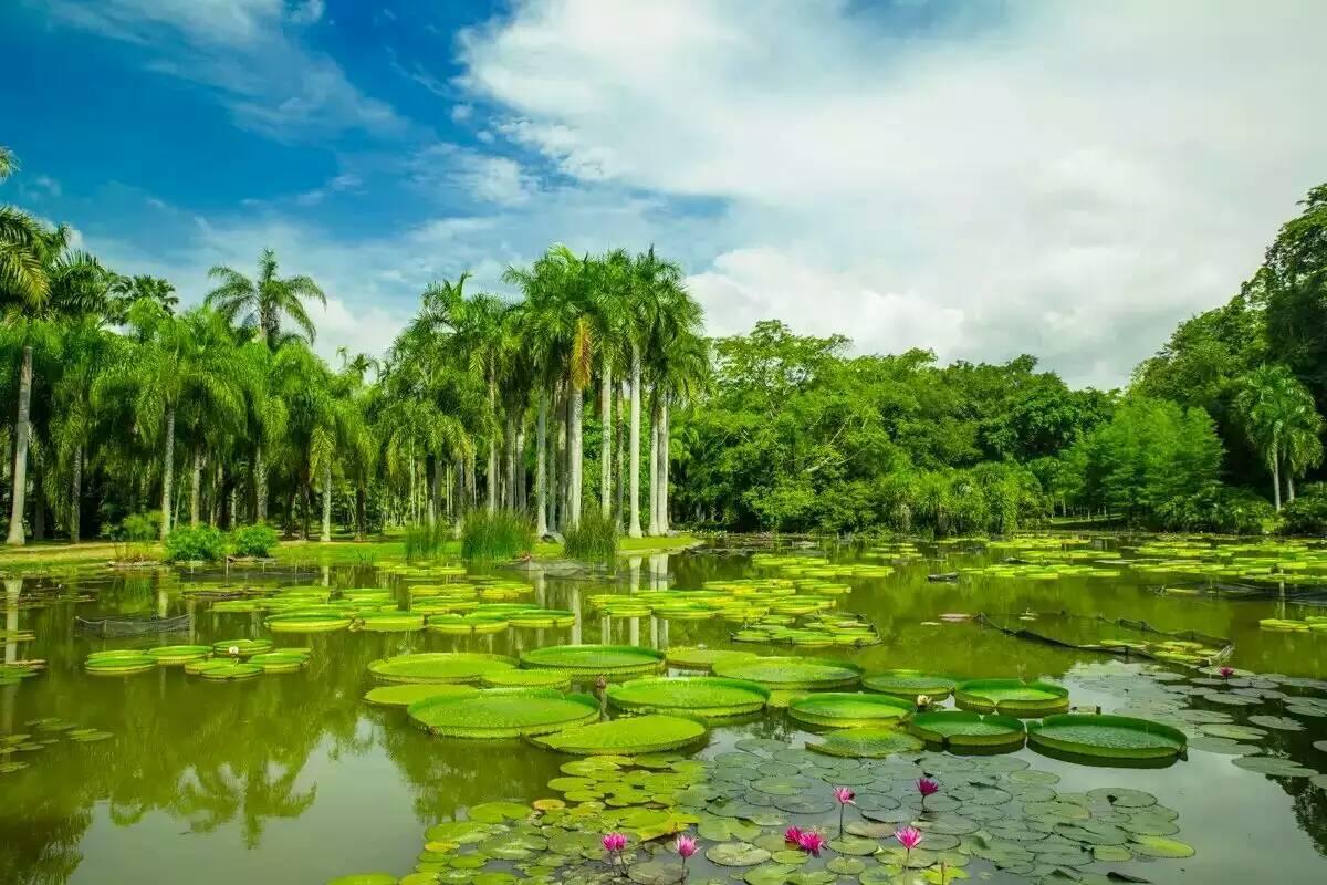 西双版纳王莲酒店 中国科学院西双版纳热带植物园