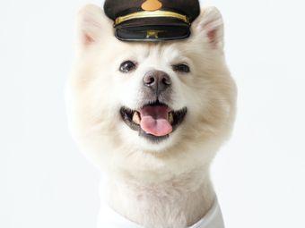 宠家Pet'sHome(新北店)