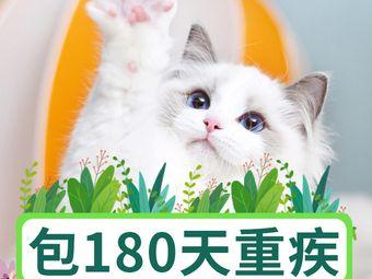 小猫来了·猫舍(广州别墅店)