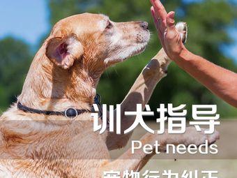 宠物寄养训练学校