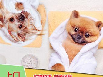 乐宠汇猫狗精品店(新天地店)