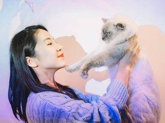 PETKIT小佩宠物·猫舍·英短金渐层·活体专卖(亭知路店)
