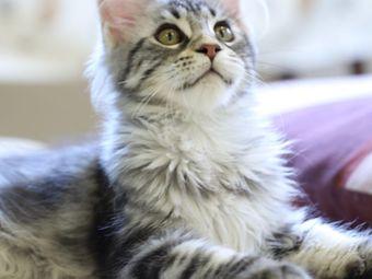 拾钱猫苑·猫咖撸猫