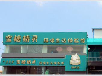 蜜糖精灵猫咪生活体验馆