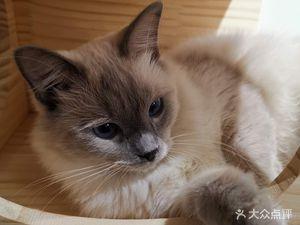 猫岛猫咖生活馆