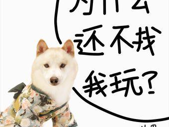 SEEKING PETS·逗柴屋·柴犬体验(河坊街店)