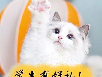 小猫来了·猫舍(杭州别墅店)
