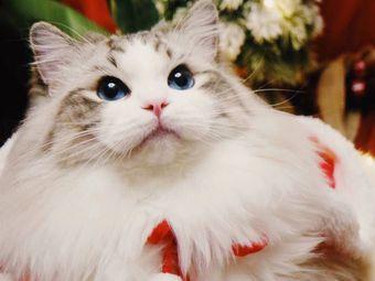 卓伊猫舍纯种猫咖互动馆