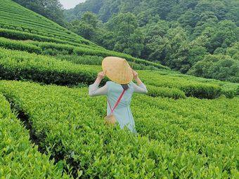 梅塢茶緣茶文化體驗館