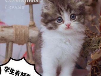 福田猫咪专卖·小猫来了(会展中心店)