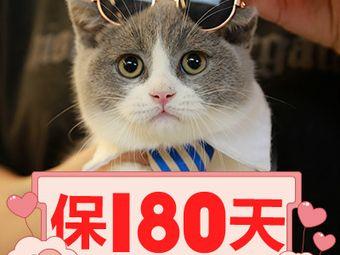 Only Cat 唯有猫名猫馆(北京路光明广场店)