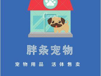 胖条优质猫狗活体专卖