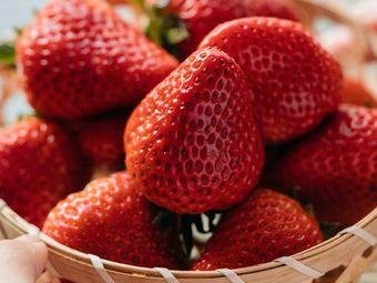 随缘草莓采摘
