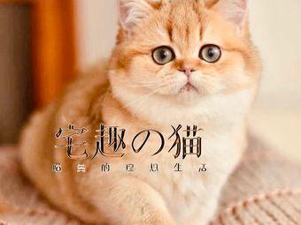 宅趣の猫·猫舍