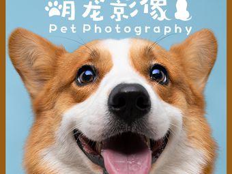 萌宠影像宠物摄影