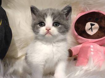 蔡先生的猫(木莲路店)