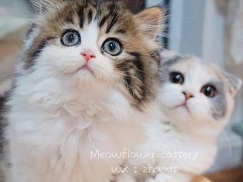 Meowflower撸猫馆·猫舍·撸兔·兔咖·猫咖啡