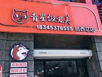 小青宠物店