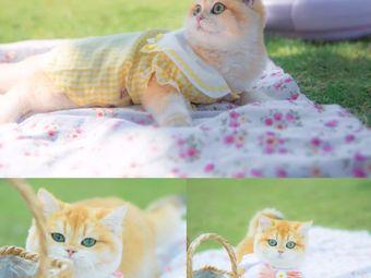 kiki宠物•猫咪售卖•猫舍