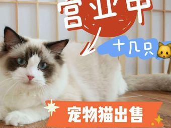 喜悦布偶猫舍猫咖