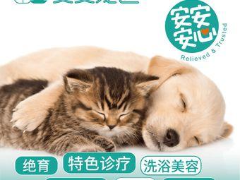 安安宠医·全科·特色猫科·软组织外科(春泽园分院)