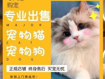 君威名宠•宠物猫狗专卖