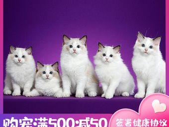 布偶猫舍(百家湖店)