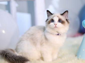 PET WISH寵物愿望(外灘店)