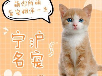 宁沪名宠•猫狗专卖