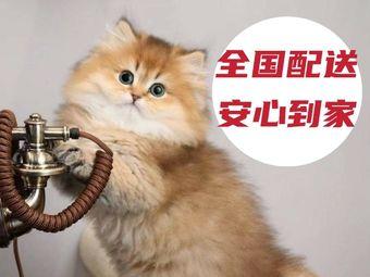 唯宠宠物 宠物销售有限公司-猫舍