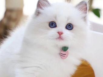喵上喵宠物猫舍·猫咪专售(新街口店)