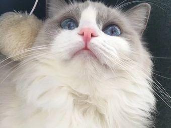 猫庄狗院猫咖