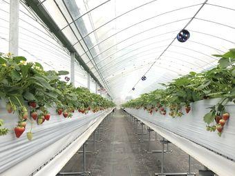 上田草莓园