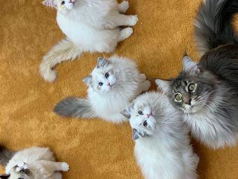 UMao猫吧.猫咪生活体验馆(宝善店)
