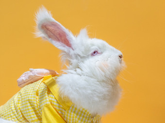 爱玩萌兔安哥拉巨兔体验馆(常州店)