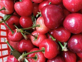 于三生态农业樱桃草莓采摘园